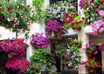 10-fiori-da-balcone-primaverili-come-scegliere-quelli-giusti