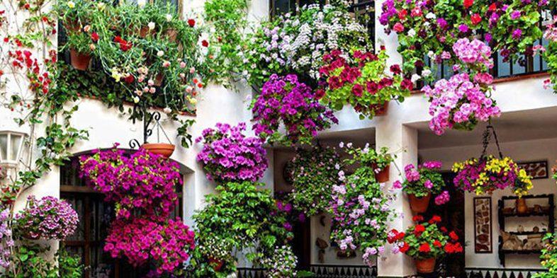 Le caratteristiche e i benefici di alcuni fiori: gelsomino, lavanda ...
